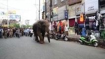 Running wild: Indian elephant ventures in city in search of food