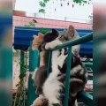 Cette compilation de chats drôles va vous plier de rire. Regardez !