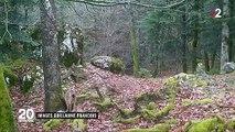 Animaux : ces lynx et vautours protégés en France