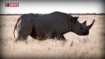 Biodiversité : des milliers d'espèces menacées