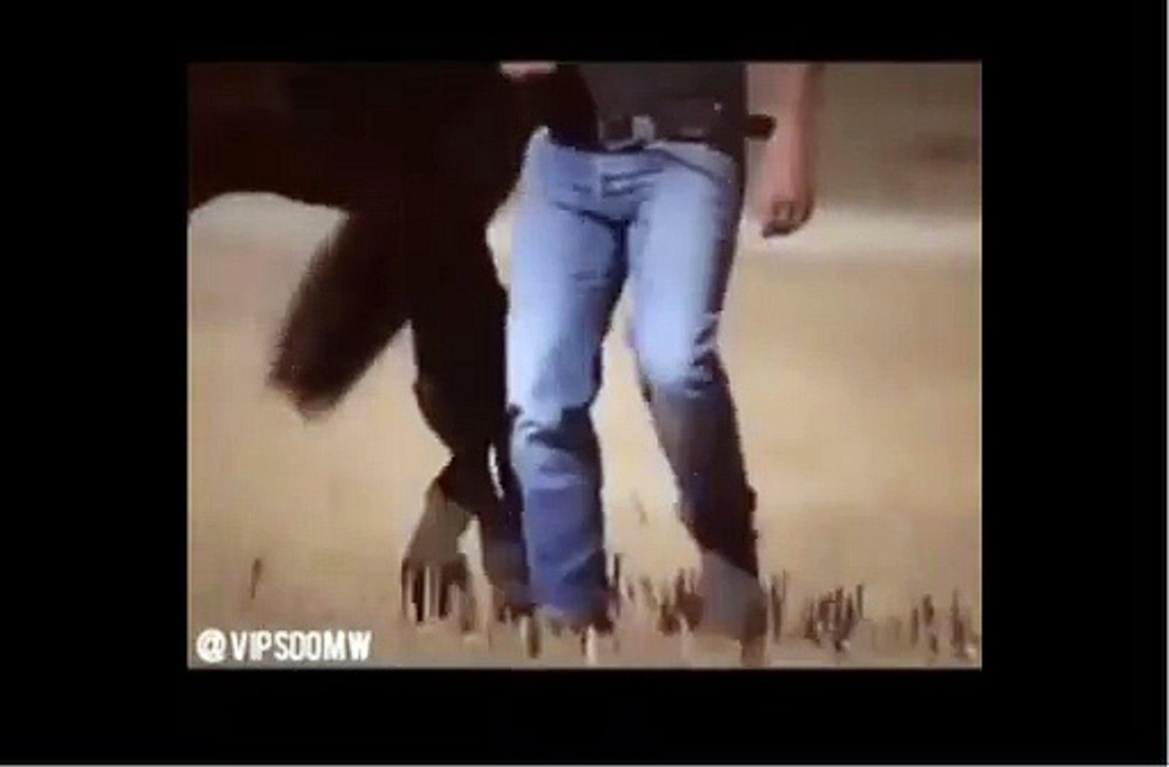beautiful horse dance beautiful animals video animal viral video