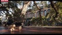 La Belle et le Clochard : la bande-annonce du remake de Disney dévoilée (vidéo)