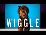 "Jason Derulo - ""Wiggle"" feat. Snoop Dogg (Cute Dog Version)"