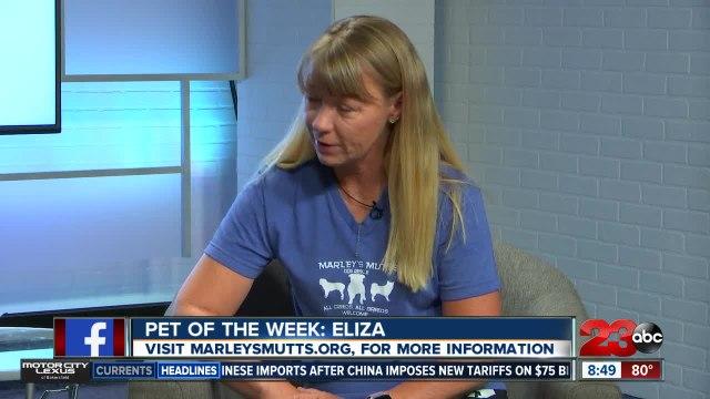 Pet of the Week: English Bulldog Eliza