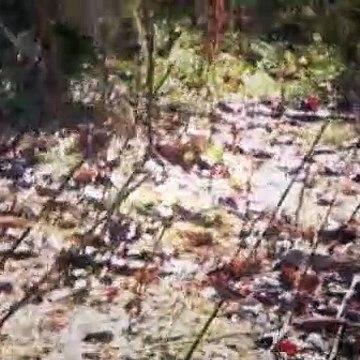 Mountain Men Season 5 Episode 14 The Sting of Defeat