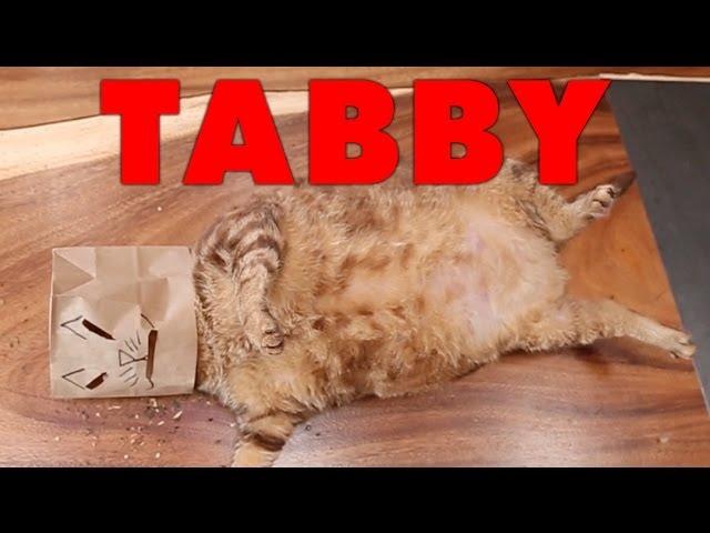 Tammy Trailer (Cat Parody)