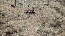 New Radiation Spots Found In Chernobyl's Red Forest