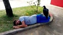 Quand un vautour vient se poser sur un homme qui dort... Mauvais signe