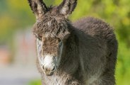 Couples are hiring donkeys called 'beer burros' to serve drinks at weddings