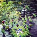 Parrot most colourful birds | Nature is Amazing #trending #parrot #birds #nature #amazing #viral