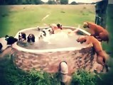 Dog pool party   Addicted to Viral   Nature is Amazing #trending #dog #dogs #funny #dog #pool #party
