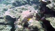 les iles similans avec thailand diving pattaya