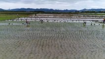 Sea rice research moves ahead as China works to boost food security