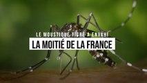 Le moustique tigre désormais installé dans la moitié de la France