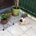 Quand un lapin s'amuse dans le balcon !
