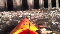 Ce kayakiste se retrouve sur un énorme banc de poisson à New York