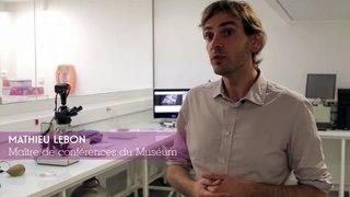 À la rencontre des chercheurs du Musée de l'Homme - Datation et caractérisation des matériaux archéologiques et sédimentaires