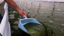 """Découvrez la spiruline, l'algue naturelle """"superaliment"""""""