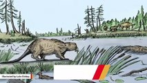 Giant Beavers Roamed Earth Thousands Of Years Ago