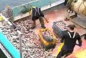 Des pêcheurs de harengs furieux