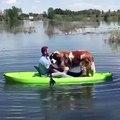 Ce chien et son maître ne tiennent pas dans une barque. Hilarant !