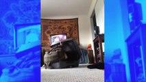 Effrayant : un chat défigure sa maîtresse alors qu'elle essayait de se cacher dans une valise