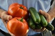 Domates ve Salatalığın Kilosu 1 Liraya Düştü