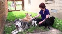 A New Digital Platform for Pet Lovers