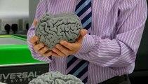 3D Printed Brains At UWE!