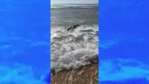France : un requin filmé dans les Landes sème la panique pendant un cours de surf !