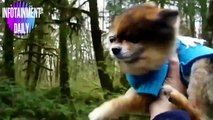 The most fun and viral animal videos!  Compilation volumen 1 - August 2019