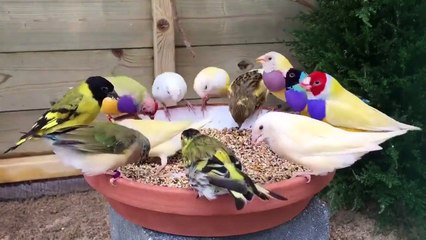 most beautiful colourful birds ever most beautiful different colors birds ever nature is amazing cute nature amazing viral