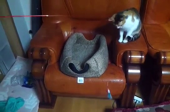 Cat teases another cat with Fishing Line – Cat Fishing | Funny Animal Videos | Nature is Amazing #Funny #Nature #cats