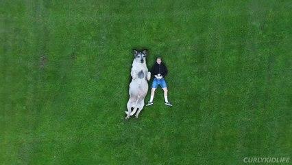 Gigantic dog.