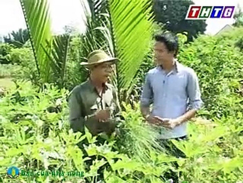 Kỹ thuật trồng và chăm sóc đậu bắp đạt năng suất cao