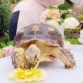 Quand une tortue déguste une splendide rose, voici ce que ça donne !