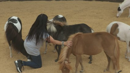 Mini Therapy Horses That Leave a Big Impact