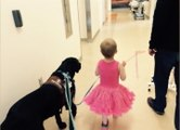 A Therapy Dog is Providing Comfort to Children at Randall Childrens Hospital