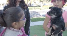 A Single Mother of Five Finds Solace in Rescuing Pets