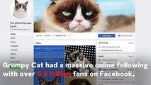 Meme Sensation Grumpy Cat Has Died Aged Seven