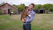A Dog's Journey: Dennis & Peaches (Featurette)
