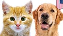 Kucing sama pandainya dengan anjing, menurut studi - TomoNews