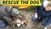 Rescue of a poisoned dog   Touching story    WooGlobe