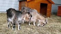 Mulhouse : les petits animaux de l'arche, grandes stars de la Foir'Expo de Mulhouse