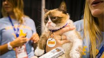 The Internet Bids Farewell To Its Most Famous Feline: Grumpy Cat