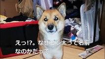 (たおやかインターネット放送)ペットとくらし兵庫県のゴン太君/繁殖されたペット、ペットショップで販売禁止Hyogo Gonta / Breeded pets, no sale at pet stores