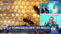 La technologie se met au chevet des abeilles. Pour les sauvegarder...ou les remplacer