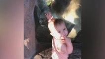 Un bébé sans peur face à un puma