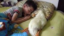 Cet enfant et son oie de compagnie dorment ensemble. Adorable