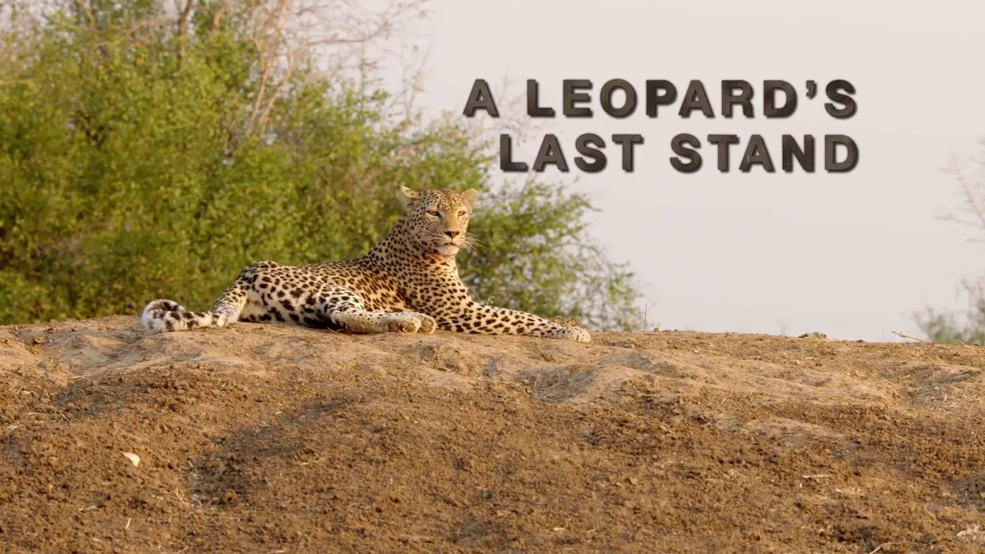 AFRICA'S HUNTERS () Season 1 Episode 2 || A LEOPARDS LAST STAND - HD